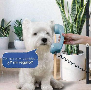 Cama Pets con envío gratis- Page 1